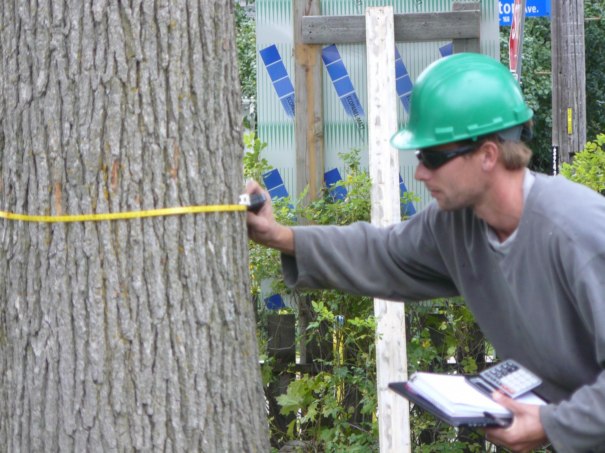 Tree Permits Ottawa | Crowe Tree and Hedge Ottawa